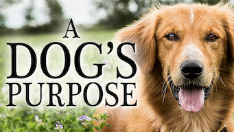 Is A Dog S Purpose 2017 On Netflix Italy